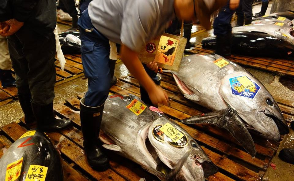 "$1.8M Tuna to ""Affordable"" $1 Tuna Sushi—The Mystery of Japanese Tuna Industry"