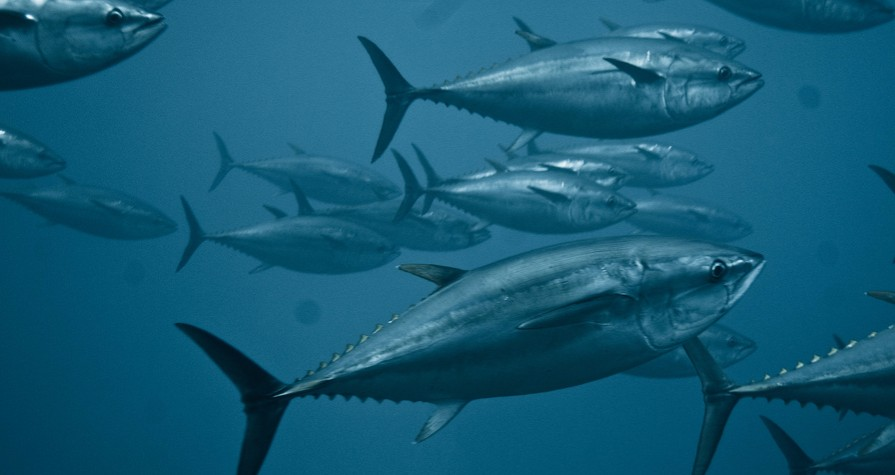 """Understanding The Tokyo 2020 """"Sustainable Sourcing Code for Fishery Products"""""""